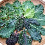 Cavoli, insalate e foglie da taglio