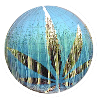 logo water hemp