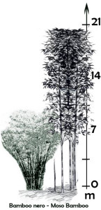schema bamboo