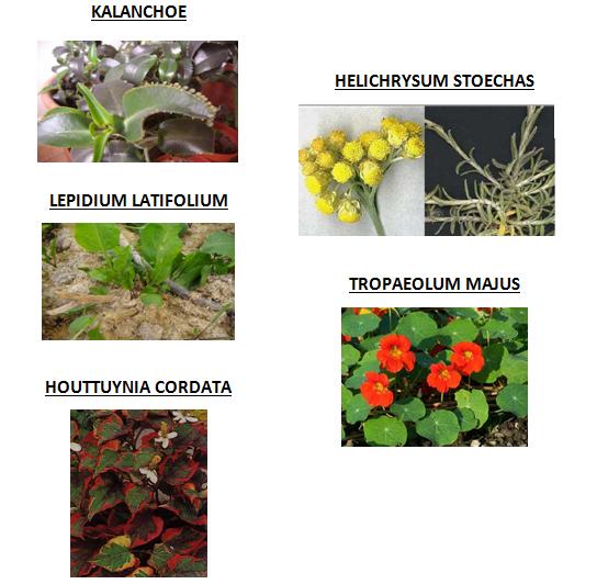 foto piante che curano