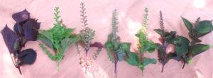 fiori perilla