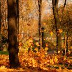 foglie-svolazzanti