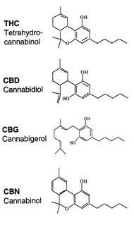 cannabinoidi